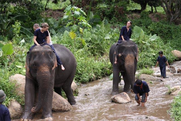 Elephantthailande