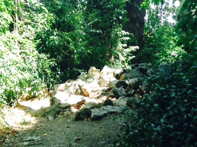 jardinbotanique3