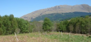 Glencoe-Wood1