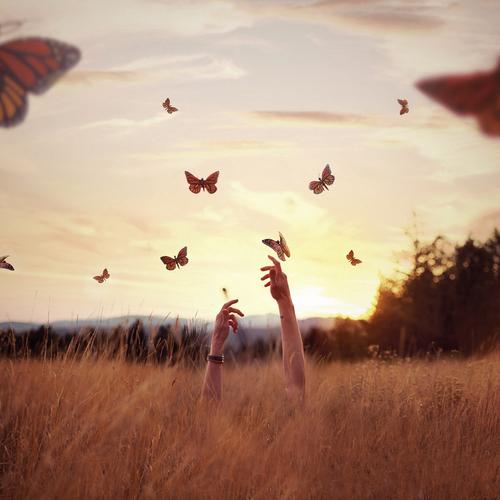 retrouverpapillons