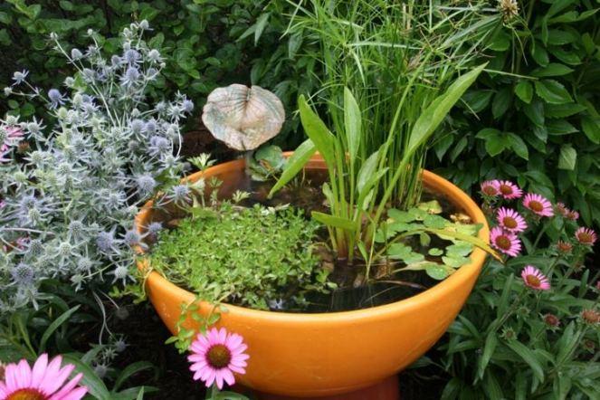 jardin-aquatique-dans-un-pot
