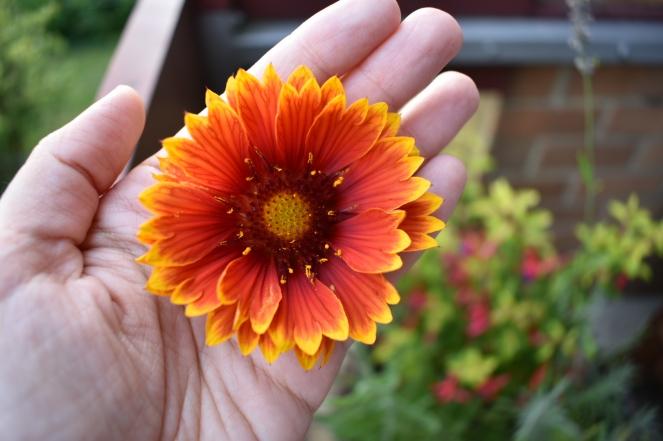 Fleur-gaillarde