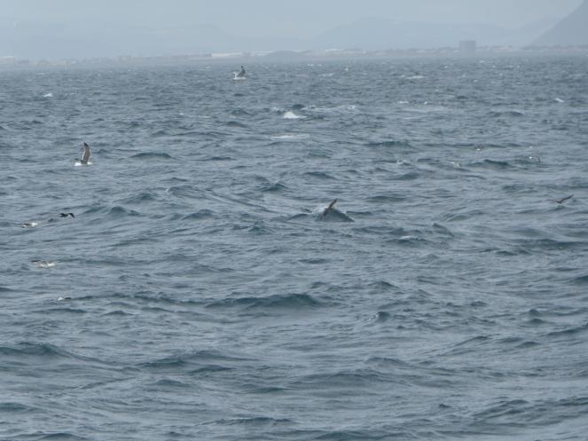 Baleine-islande-reykjavik